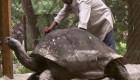 آیا پیرترین حیوان زنده دنیا را می شناسید؟ + تصویر