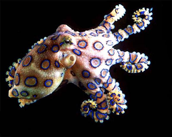 عکسهای خطرناک ترین موجودات دنیا