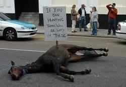 عکس یادگاری زن برهنه هلندی با اسب مرده!!