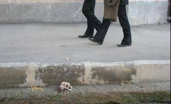 جنین بچه در جوی خیابان ولی عصر تهران + عکس