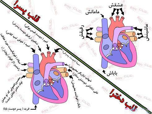 تفاوت قلب دخترها با قلب پسرها + عکس