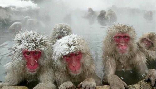 وقتی میمون ها به جکوزی میروند + عکس