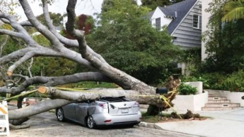 یك درخت،لكسوس خانم سوپر استار را نابود كرد + عکس