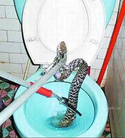 www.parsnaz.ir - حتی در دستشویی هم نمی توان امنیت داشت + عکس