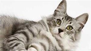 زنی پس از مرگ خود، گربه اش را میلیونر کرد + عکس