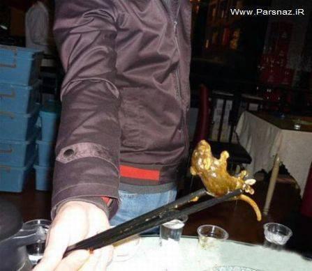 پیدا شدن یک موش در سوپ یک زن + عکس