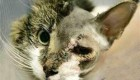 عمل زیبایی روی صورت گربه + عکس