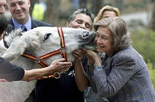 عکس های دیدنی از ملکه اسپانیا و بوسیدن خر