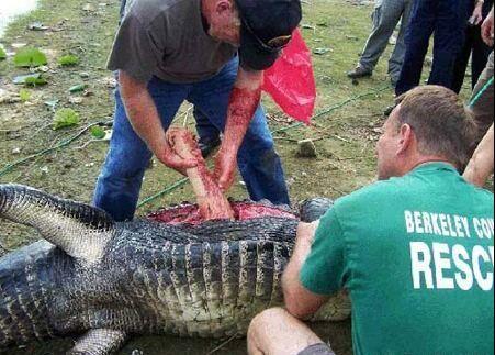 حمله تمساح به مرد گلف باز و کندن دست او! + عکس