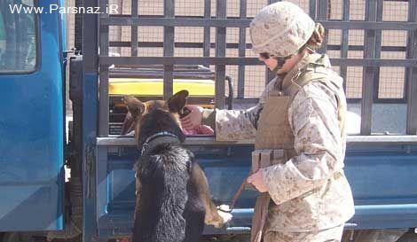 دختری برای بدست آوردن این سگ ارتش آمریکا هر کاری میکند