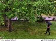 عکسهای بارش باران در نخستین روزهای تابستان در رشت..!