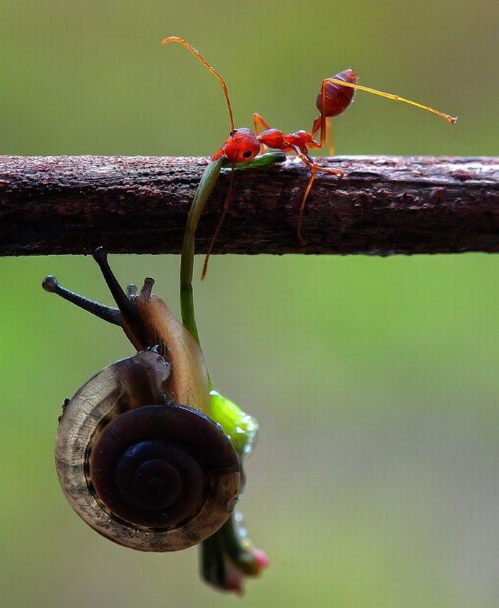 عکسهای طنز و بسیار جالب !!!