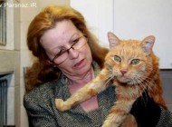 برگشتن یک گربه پس از 16 سال به خانه خودش + عکس