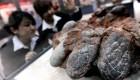 پیدا کردن گنجینه ای از تخم دایناسورها در قفقاز! + عکس