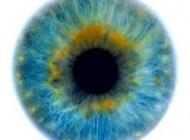 میوه بسیار مفید برای چشم های شما