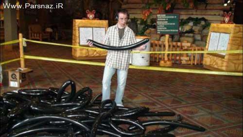 بزرگترین عنکبوت پرنده جهان در گینس ثبت شد + تصاویر