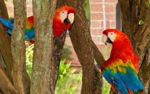 www.parsnaz.ir - داستان بسیار جالب طوطی ها از غصه دق می كنند