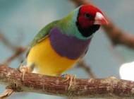 شخصیت شناسی جالب با پرندگان (طالع بینی)