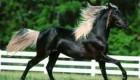 داستان کوتاه و آموزنده اسب زیبا