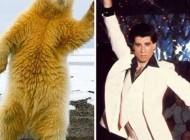 رقص و حرکات جالب این خرس قطبی + عکس