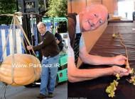 ثبت رکورد جدید گینس در نمایشگاه غول پیکرترین سبزیجات دنیا