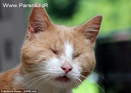 www.parsnaz.ir - این گربه باهوش و نابینا پیانو می نوازد + عکس
