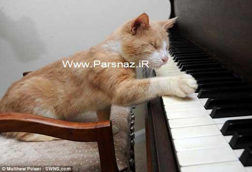 این گربه باهوش و نابینا پیانو می نوازد + عکس