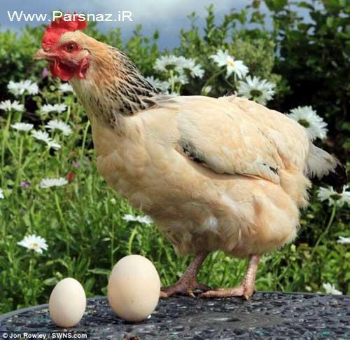 جوک گرانی تخم مرغ