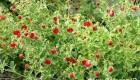 دانشمندان هندی گیاهی برای جلوگیری از پیری کشف کردند