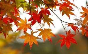 درباره مزاج پاییز و فصل زمستان و نکات مهم آن!
