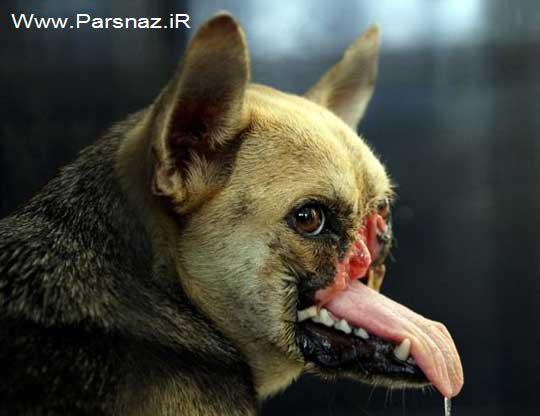 فداکاری باورنکردنی و خارق العاده یک سگ فیلیپینی