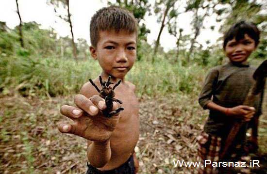 انسان هایی که عنکبوت و رتیل می خورند (عکس)
