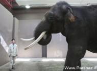 تعجب دانشمندان از این فیل که حرف می زند