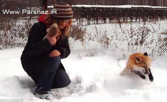 تلاش جالب این دختر برای دست آموز کردن روباه ها (عکس)