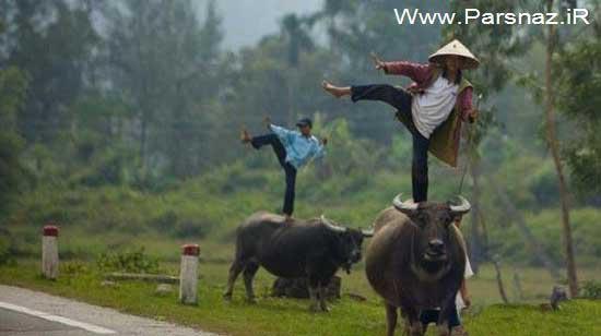 عکس های جالب و خنده دار از سوژه های خارجی