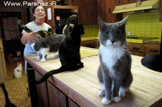 زندگی مشترک و عجیب این خانم بیوه با 800 گربه