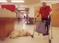 نجات دادن پیرزن 61 ساله توسط سگ قهرمان