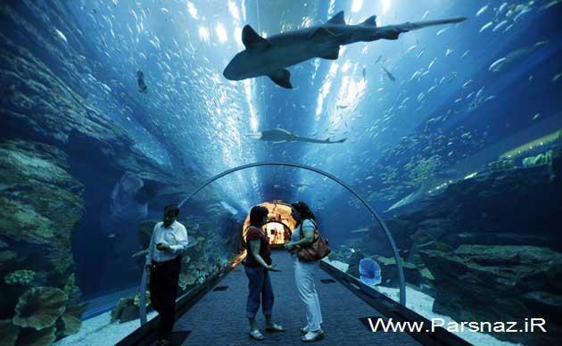 عکس های شگفت انگیز از زیباترین آکواریوم های دنیا