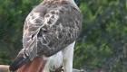 عکس های پنج پرنده خطرناک که باید از آنها دوری کرد