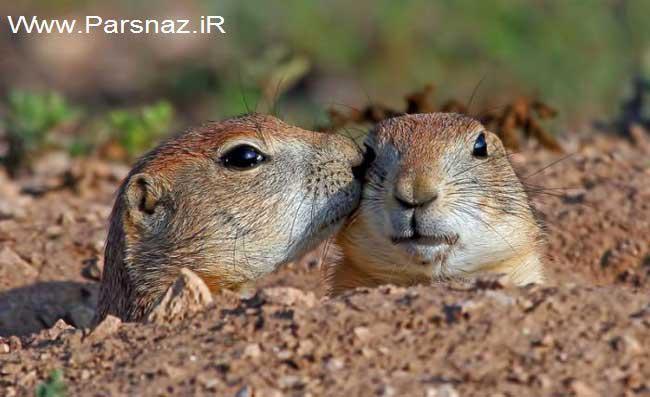 www.parsnaz.ir - عکس های دیدنی و بسیار خنده دار