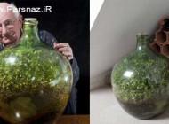 این گیاه 40 سال است که آب نخورده است! (عکس)