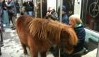 تعجب مردم از این دختر با اسبش در واگن متروی شهری