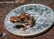 عکس هایی از عجیب ترین موجودات جهان در سال 2012