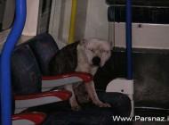 اتفاقی جالب و حیرت انگیز در مترو لندن (عکس)