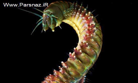 www.parsnaz.ir - بهترین عکس های علمی دنیا از نظر مجله نیچر