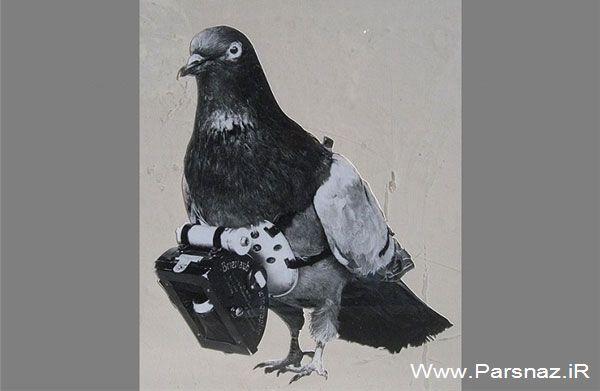 عکس های جالب از کبوترهای جاسوس