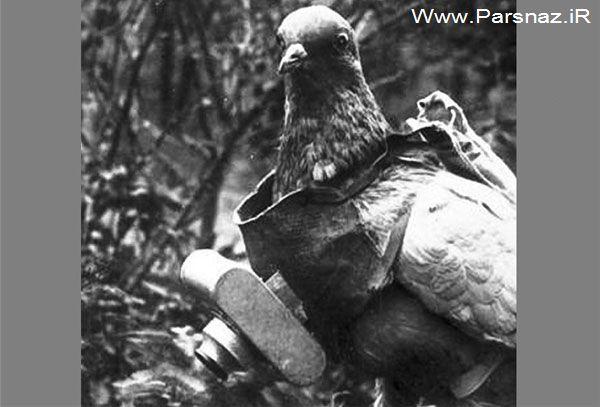 Wpid cw mfntSUn4 Птицы войны: прототипы беспилотников появились в Германии