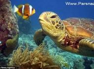 گوشه ای از قدرت خدا، لاک پشت های رنگی استرالیا (تصاویر)