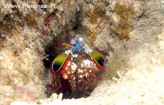 www.parsnaz.ir - عکس هایی از موجودی عجیب و بسیار زیبا با هویتی نامعلوم