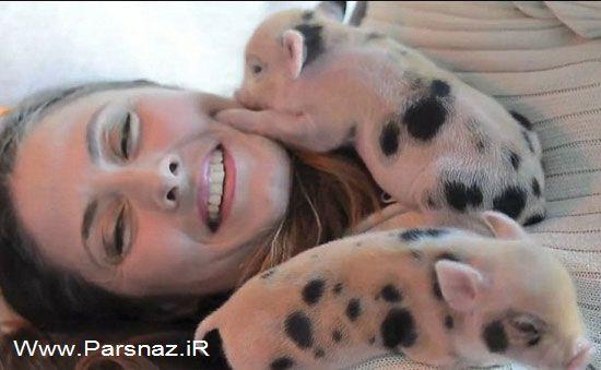 زندگی عجیب و پر ماجرای این خانم با خوک های خانگی!